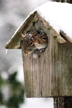 PetsLady's Pick: Cute Squirrels Of The Day ... see more at PetsLady.com ... The FUN site for Animal Lovers