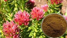 herbal-medicine-against-cancer