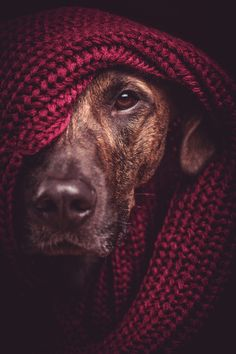 marsala colour:Amazing pet photography by Elke Vogelsang #marsala