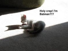 Hahaha! My cat did this last night! :-) Cats just don't know how awesome their shadows look!