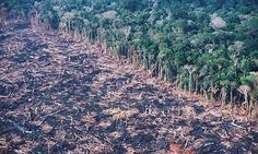The Amazon rainforest shouldn't look like this. :(
