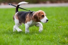 Top Tips For Training Your Dog To An Electric Fence