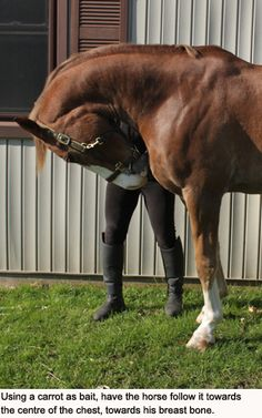 Core Strengthening & Rounding Exercises for Your Horse – Horse Canada Equestrian Boots, Equestrian Outfits, Equestrian Style, Equestrian Fashion, Canadian Horse, Horse Exercises, Types Of Horses, Riding Lessons, Horse Training