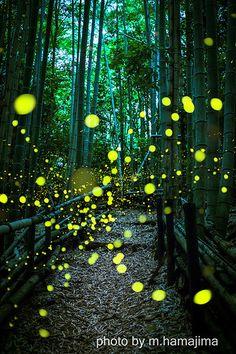 Firefly Art, See It, Good Night, Bamboo, Fireflies, Amazing, Scenery, Photography, Painting