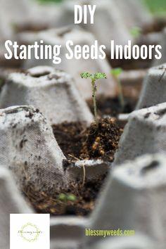 7 Hacks For Starting Seeds Indoors Starting Vegetable Seeds, Starting Seeds Indoors, Seed Starting, Germinating Seeds Indoors, Planting Seeds Quotes, When To Plant Seeds, Container Gardening, Indoor Gardening, Healthy Seeds