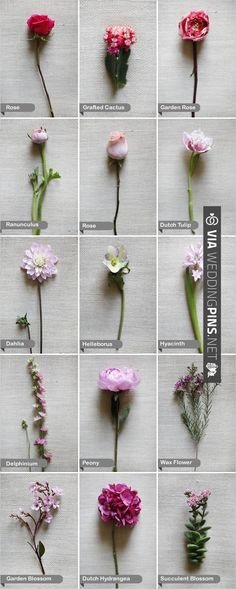 Pink Flowers Listed by Name - A Pink Wedding Guide to Flowers | WEDDINGPINS.NET | #pinkweddingflowers2016