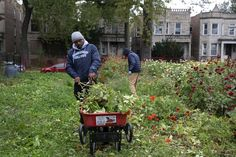 He moved to Englewood because he wanted to. Now, Quilen Blackwell is turning vacant lots into flower farms. Chicago Blog, Connecticut Colleges, Urban Agriculture, Flower Farmer, Environmental Science, He Wants, Zinnias, Event Planning, The Neighbourhood
