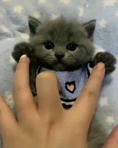 Amazing Little Cute Black Kitten - Lovely Pet - Cute cat Cute Kittens, Cute Baby Cats, Cute Cat Gif, Cute Little Animals, Cute Dogs, Cute Black Kitten, Sweet Cat, Cute Animal Photos, Fluffy Cat