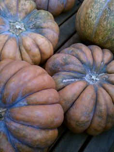 Cinderella pumpkins <3