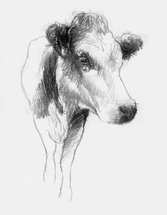 Cow sketch, Artist Sean Briggs producing a sketch a day, prints available at https://www.etsy.com/uk/shop/SketchyLife #art #cow #drawing #http://etsy.me/1rARc0J