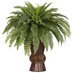 nearly natural Silk Boston Fern Plant (Green) (3 310 UAH) ❤ liked on Polyvore featuring home, home decor, floral decor, green, plants, flowers, flowers and plants, tree, silk flower tree and faux tree