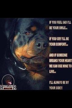My breed !!! My boy. Since 1990 I've always had a rotty in truck and by my side.