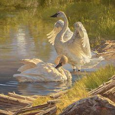 The Art of Dustin Van Wechel is an online gallery showcasing the work of award-winning American artist, Dustin Van Wechel. Wildlife Paintings, Wildlife Art, Animal Paintings, Animal Drawings, Unique Drawings, Country Art, Nature Animals, Bird Art, Beautiful Birds