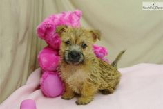 Carine Terrier