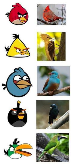 Real Angry Birds (15 Pics Dang! How'd I miss this one?!