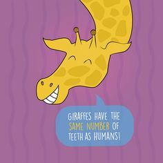 DID YOU KNOW that humans and giraffes both have 32 teeth? Our office is excited about the news of the new baby giraffe Dobby at our Denver Zoo. Do you have plans to visit soon? 303-452-2277 https://www.1stimpressionsortho.com/ #Denver #Orthodontics