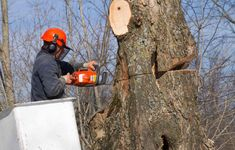 Northern Beaches Tree and Garden Services offer highly specialised and efficient emergency #tree services in Parramatta.  Our specialists help re-shape a grown tree, to give it the appearance you wish for, or eliminate any hindrance its growth might cause.