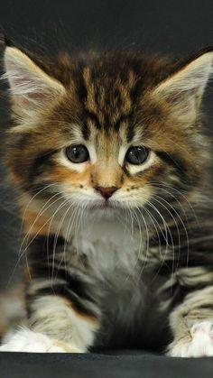 Oh little kitty why do you look so sad!