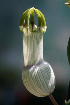 funniest flower in the world