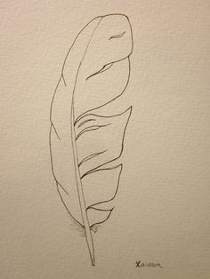 Sea bird feather -- original ink drawing