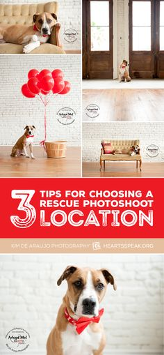 The background of an image can make subtle hints about the rescue pet you're photographing. Here are some tips from professional photographer and HeARTs Speak member Kim de Araujo on how to choose the a spot that rocks!