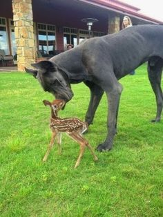 6 strange and amazing animal friendships, so adorable :)