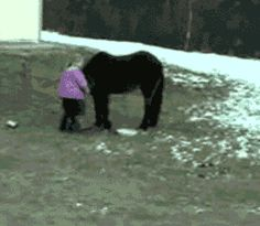 Unorthodox way to mount a pony