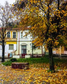 Macedonia Greece, Smell Of Rain, Autumn Scenes, Yellow Leaves, Greece Travel, Warm Colors, Places To Go, Mansions, Photo And Video