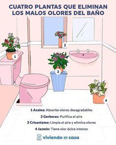 Best Indoor Plants, Indoor Garden, Home And Garden, Household Cleaning Tips, Cleaning Hacks, Plants Are Friends, Paper Flowers Craft, Vegetable Garden Design, Bedroom Plants
