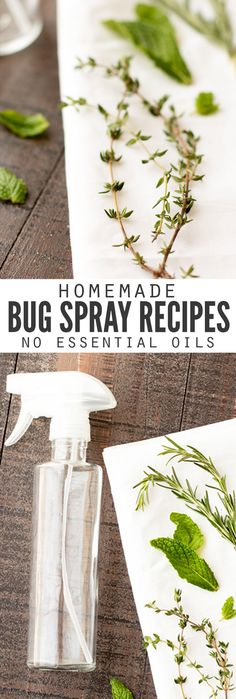 Such a helpful articles with the secret to keeping bugs bugs away naturally with all natural homemade bug spray recipes, made without essential oils! Every recipe can be made with just a few ingredients you have in the kitchen, and they're SO MUCH cheaper than buying it from the store. And safer too since they don't contain DEET! :: DontWastetheCrumbs.com