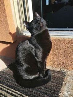 Proteggi i gatti neri questo Halloween - Katzen Bilder Cute Cats And Kittens, I Love Cats, Crazy Cats, Cool Cats, Adorable Kittens, Animals And Pets, Baby Animals, Funny Animals, Cute Animals