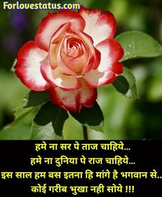 Top 10 Best Happy New Year Shayari in Hindi Best New Year Wishes, New Year Wishes Messages, Happy New Year, Shayari Image, Shayari In Hindi, Love Status, Romantic Love Quotes, Good News, Happiness