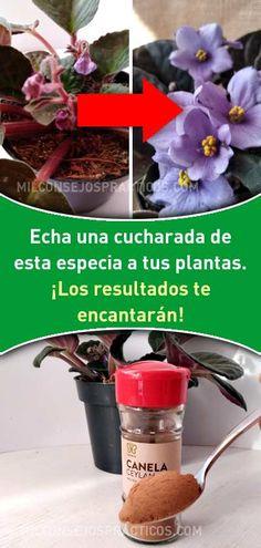 Echa una cucharada de esta especia a tus plantas. ¡Los resultados te encantarán! Ikebana, Container Gardening, Gardening Tips, Garden Online, Arte Floral, Perfect Makeup, Outdoor Plants, Petunias, Growing Plants
