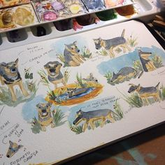 Agora  a vez da Pitchula Now is time to study Pitchula Pitch pitch pitch dwgdaily cute dog watercolor color childrenillustration