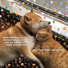 Image about love in 𝐰𝐡𝐨𝐥𝐞𝐬𝐨𝐦𝐞 𝐦𝐞𝐦𝐞𝐬 💌 by 𝐢𝐬𝐥𝐚 𝐣𝐚𝐬𝐦𝐢𝐧𝐞! Cute Cat Memes, Cute Love Memes, Funny Love, Gf Memes, Heart Meme, Cute Messages, How Lucky Am I, When You Smile, Wholesome Memes