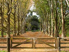 country driveway entrances | This is the driveway to a large property in rural N.S.W