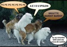 Brigitte Bardot, New Years Eve Party, Petunias, Lol, Memes, Funny, Animals, Vespa, Video