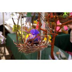 Birds nest Nest, Birds, Plants, Nest Box, Bird, Planters, Plant, Planting