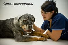 This photo really shows off Rommel, my 10 year old Rottie's, colour mutation. He has Vitiligo, which is a very very rare auto immune condition where his body attacks his dark pigment cells, turning him gradually white.     This condition (along with his handsome looks and sharp wits) has lead to international fame and deservedly for such a star, he has his own furniture at home (spoiled). Big Hugs, 10 Year Old, Autoimmune, Conditioner, Handsome, Turning, Photography, Animals, Colour