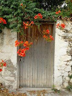 Humming Bird Vine covering doorway