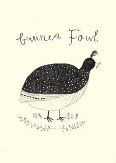 Katt Frank - pictures of guinea fowl