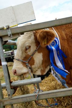 Taking things easy at the North Devon Show. Picture: Andy Keeble