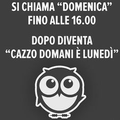 Italian Memes, I Hate My Life, Sarcastic Quotes, Just Smile, Twisted Humor, Funny Moments, Funny Photos, Laugh Out Loud, Slogan