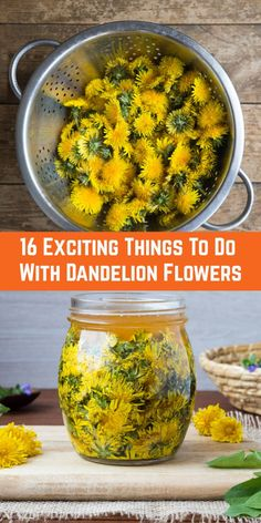 16 Exciting Things To Do With Dandelion Flowers 16 Exciting Things To Do With Dandelion Flowers Dandelion Jelly, Dandelion Flower, Dandelion Uses, Dandelion Wine, Herb Recipes, Canning Recipes, Healing Herbs, Medicinal Herbs, Superfood