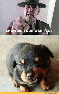 funny pictures,furry,auto,full metal jacket,face,animals,baby dog,puppy