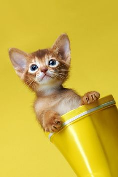 Ok so I'm a yellow kitten looking out of a bright yellow cup.