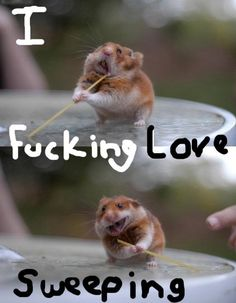 lol funny animals, spaghetti, funny animal pics, funny pictures, the face, funni, noodl, hamsters, funny faces