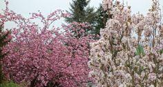 Pflanzen im Garten #pflanzen #blumen #garten #flowers #plants #garden
