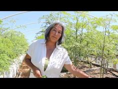 This is the introductory video to an instructional series on how to grow Moringa Oleifera, presented by Mariko Gifford, founder of Moringa for Life. Health Foods, Permaculture, Mornings, Landscape Design, Grid, Garden Ideas, Berries, Landscaping, Moringa Oleifera