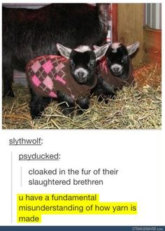 Funny tumblr post All About Animals, Animals And Pets, Funny Animals, Cute Animals, Baby Animals, Funny Cute, Really Funny, Hilarious, Tumblr Funny